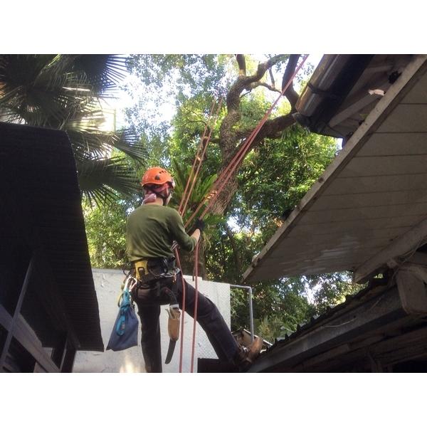 樹木修剪-剪刀倫園藝社