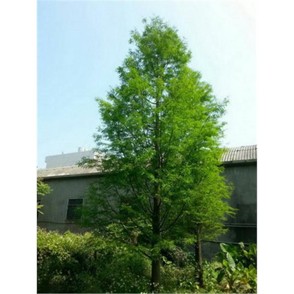 樹木-和平園藝有限公司