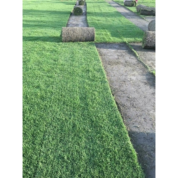 台北草,巴西地毯草,玉龍草,韓國草,百慕達草,假儉草,聖奧古斯丁,地毯草