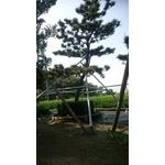 景觀樹用支架