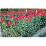 花類支撐網