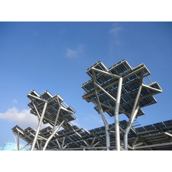 漁港太陽樹